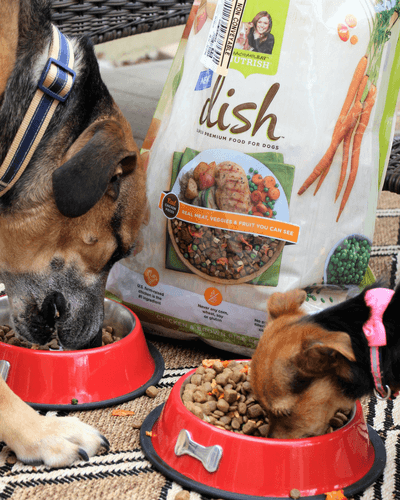 5 Tips to Allow Your Dogs to be Part of the Family During Dinnertime
